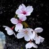 花芯の彩と蕊