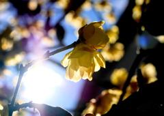 冬陽のささやき