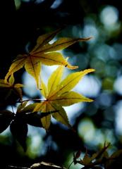 静かな秋日和