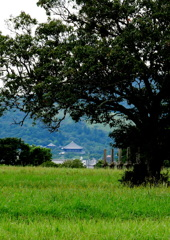 東大寺遠望