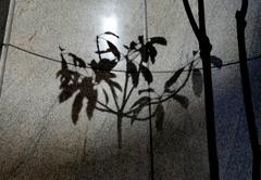 無機質な影