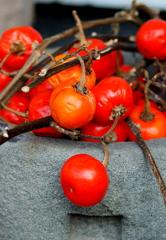 花茄子の赤