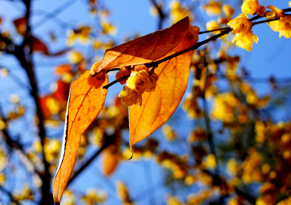 葉陰に咲く