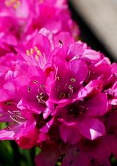 花粉のさそい