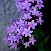紫色の午後