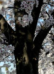 木洩れ日の影