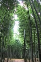 竹 雨の合間