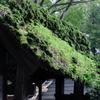 屋根のコケと草