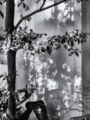 木の影が映る壁