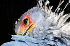 厚化粧な鳥