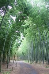 竹のシャワー