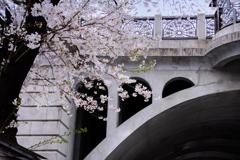 音無川桜ロード 1