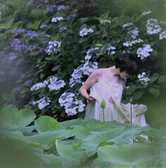 紫陽花の中で