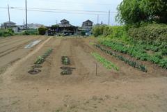 ニュー菜園全体図