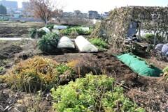 冬枯れの菜園風景