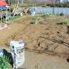 ジャガイモ植え床