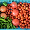 第十一回トマト