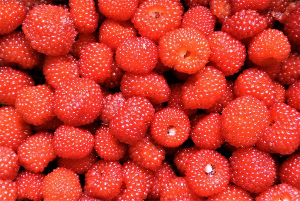 甘い々クサイチゴ採取