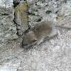 ネズミの赤ちゃん.