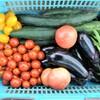 今日の夏野菜収穫