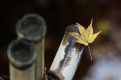 落葉の行方