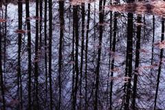 ラクショウの森