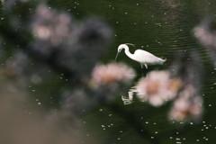 鷺池春小景