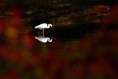 鷺池秋小景