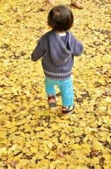 黄色の絨毯を小走りで
