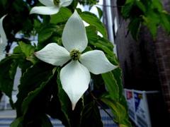 十字を切る花