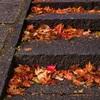 落葉を眺めて参道を登る