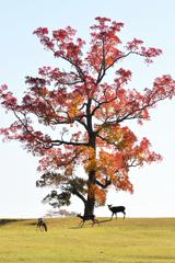 南京ハゼの木の下で(2)