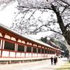 東大寺の春(1)