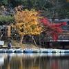 鷺池の晩秋