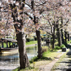 伏見の春(9)