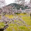 藤原京跡の春(4)