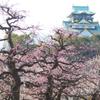 大阪城梅林景色(4)