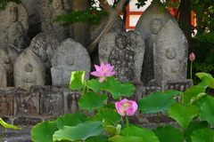 石仏と蓮花(2)