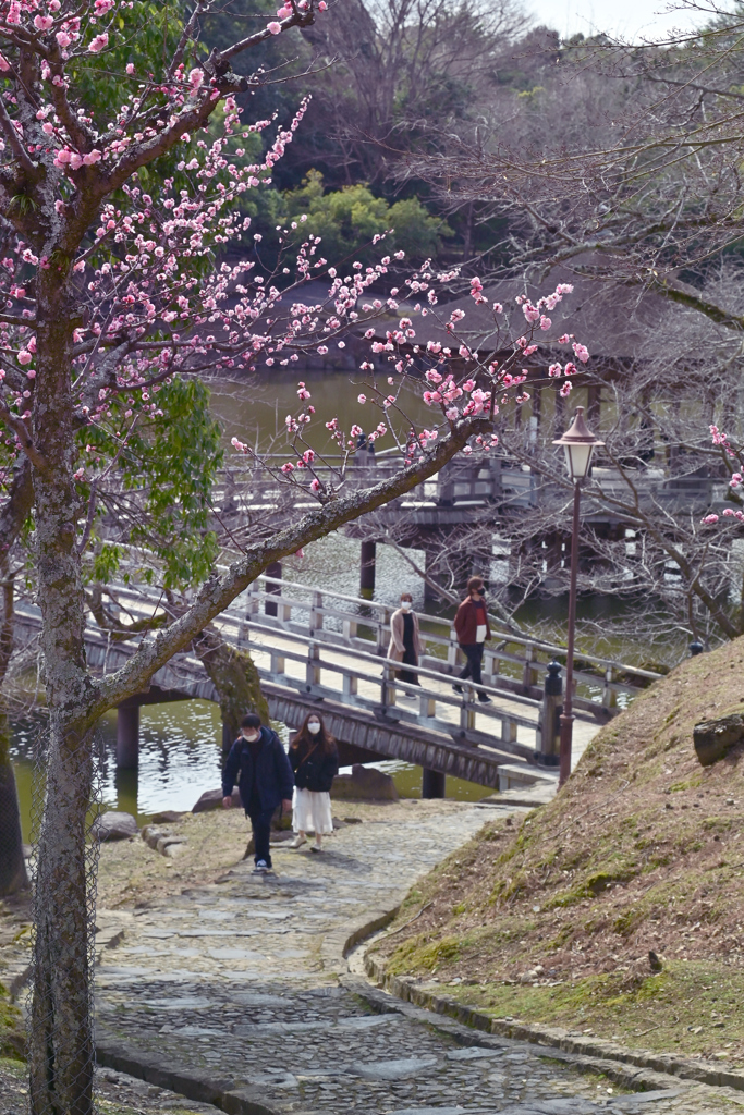 散歩の小道(1)