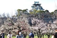 大阪城梅林景色(2)