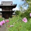 般若寺の秋(5)