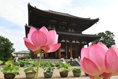 蓮花の寺(3)