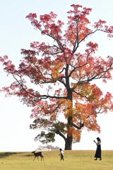 南京ハゼの木の下で(3)