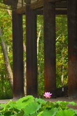 唐招提寺に夏が来た(2)