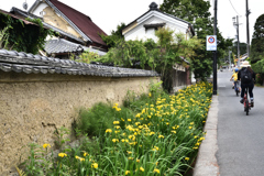 黄菖蒲の咲く道