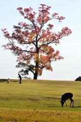 南京ハゼの木の下で(1)