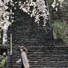 長谷寺の春(14)