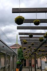 コケ玉の駅(4)