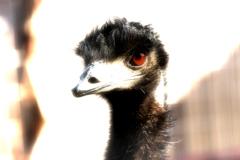 赤い目の鳥