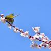 春の日差しの中で(6)